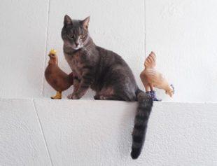 image de Isabelle Nicol pour la 2e scène virtuelle du chat noir
